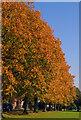 SP6658 : Autumnal Trees : Week 41