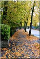 SK6303 : Autumn Leaves on Spencefield Lane by Andrew Tatlow