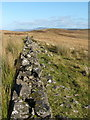 NS4280 : Dry-stone wall from edge of Nobleston Wood by Lairich Rig