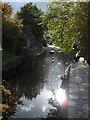 SX8060 : River Dart, Totnes : Week 42