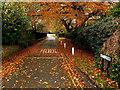 TA1828 : Ivy Lane, Hedon : Week 45