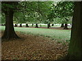 SK5339 : Lime Tree Avenue by Alan Murray-Rust