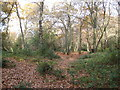 SU9484 : Burnham Beeches: Iron Age hill fort by Nigel Cox
