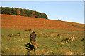 NT8319 : A pheasant shoot at Bught Stack : Week 46
