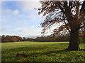 SU7688 : Pastures, Hambleden by Andrew Smith