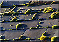SJ3301 : Moss on the roof : Week 47