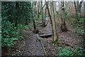 TQ5942 : Boardwalk path through Barnetts Wood by N Chadwick