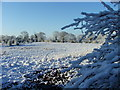 SJ7879 : Mobberley Nature Reserve from Townfield Road by David Butler