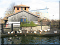 TQ3679 : Rotherhithe City Farm - ducks by Stephen Craven