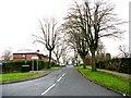 SE1332 : Springfield Avenue - Clayton Road by Betty Longbottom