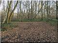 SU8090 : Moorend Common by Shaun Ferguson