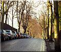 J3271 : Cadogan Park, Belfast : Week 4
