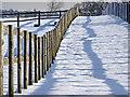 TQ2996 : Bridleway between the fields, South Lodge Farm, Enfield : Week 5