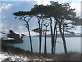 SW7727 : Monterey Pines by the Helford River by Rod Allday