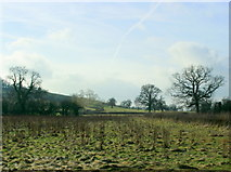 ST6659 : 2009 : West from Bloomfield Road (or Timsbury Road) by Maurice Pullin