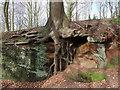 SK5775 : Tree on sandstone : Week 8