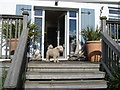SW8836 : Driftwood Hotel - dog on the back porch by Ian Cunliffe