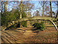 SU8869 : Tree arch at Lily Hill Park : Week 8