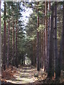 SU8665 : Path leading to Crowthorne Wood by don cload