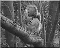 H4572 : Squirrel, Omagh by Kenneth  Allen