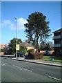 SP0883 : Corner of Fernside Gardens and Yardley Wood Road by araucaria araucana