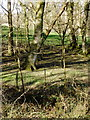 SX2995 : Woodland, near Wescott by Roger Cornfoot