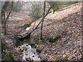 TQ4398 : Epping Forest: stream above Debden Green by Stephen Craven