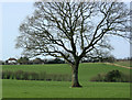ST6261 : 2009 : Oak tree and pasture west of Chelwood by Maurice Pullin