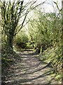 SP9313 : The Path runs through some light woodland, College Lake by Chris Reynolds