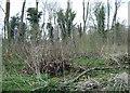 TL0599 : Bedford Purlieus National Nature Reserve by Simon Huguet