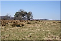 NJ3937 : On the Plateau Above Glen Beg by Anne Burgess