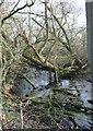 SJ6051 : Mere in woodland, near Baddiley by Espresso Addict