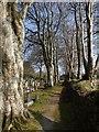 SX0552 : Campdowns Cemetery by Derek Harper