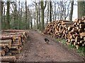 SP9109 : Harvested logs waiting for collection in Pavis Wood by Chris Reynolds