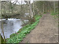 SK2479 : River Derwent at Coppice Wood by Chris Wimbush