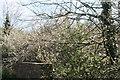 SW3825 : Bridge near Penrose by Elizabeth Scott