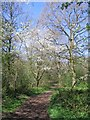 SP2873 : Blossom, Crackley Wood by E Gammie