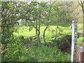 SJ7264 : Overgrown footpath at Briarpool by Stephen Craven