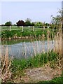 SP8613 : Aylesbury Arm:  The Reeds have been cleared to facilitate fishing by Chris Reynolds
