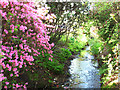 TQ1971 : Stream in Isabella Plantation by Stephen Craven