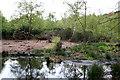 SE0838 : Coppice Bog, St Ives Estate by Mark Anderson