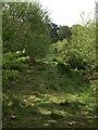 SW7942 : In Kea Wood by Derek Harper