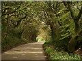 SW7942 : Road past North Plantation (2) by Derek Harper