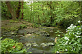 SD5406 : Stream in Porters Wood by Gary Rogers