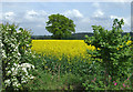 SO7997 : Gap in the hedge near Kingslow, Shropshire : Week 19