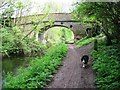 SP8811 : Wendover Arm of the Grand Union Canal: Wellonhead Bridge (No 7) from the West by Chris Reynolds