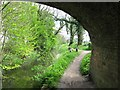 SP8811 : Wendover Arm: Looking East from under Bridge No 7 by Chris Reynolds