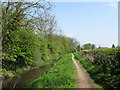 SP8811 : Wendover Arm: The Disused Canal and Towpath West of Bridge No 7 by Chris Reynolds