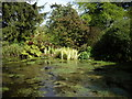 NJ7900 : Ornamental pond in Drum Castle grounds : Week 20