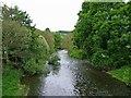 SN9985 : Afon Hafren (River Severn) by P L Chadwick
